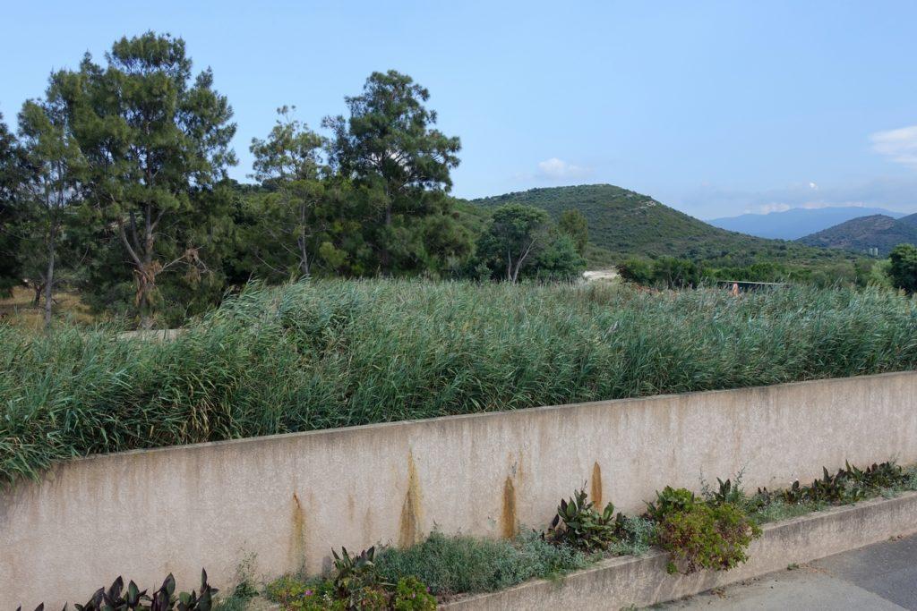Un des 7 lits à rhizophytes permettant le séchage des boues